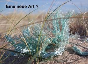 """Postkarte """"Eine neue Art ?"""" © T. Clemens"""