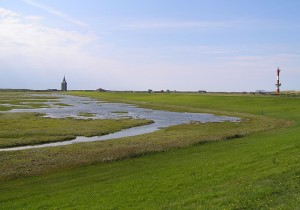 Salzweise auf Wangerooge © Nationalparkhaus