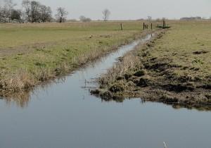 niedriger Wasserstand während der Brutzeit © Mellumrat/Lautenbach