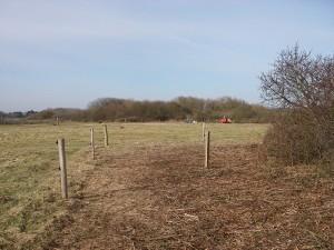 Der alte Zaunpfahl zeigt wo noch vor 3 Jahren der Zaun stand © Mellumrat