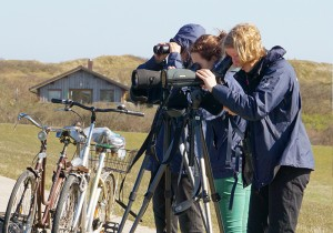 Naturschutzwarte bei der Vogelbeobachtung © Mellumrat/Ulber