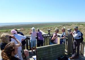 Zahlreiche Vogelinteressierte trafen sich im Inselosten zum Weltzugvogeltag © NLP-Hau