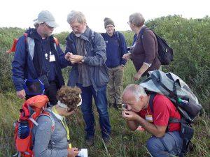Beim GEO-Tag der Natur konnten die Botaniker*innen 224 Pflanzenarten auf Wangerooge nachweisen. 19.08.2017, Foto © Gent/NLPV