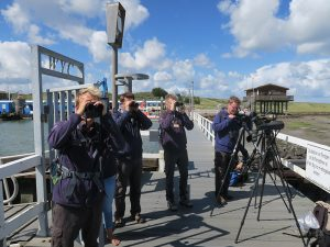 Ornithologen am Hafen von Wangerooge 19.08. 2017, Foto © Heckroth/Mellumrat e.V.
