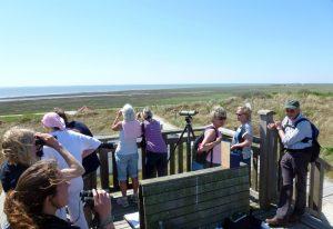 Zahlreiche Vogelinteressierte trafen sich im Inselosten zum Weltzugvogeltag Wangerooge 2016