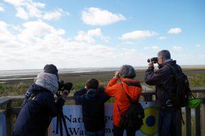 Weltzugvogeltag auf Wangerooge 2019 Foto: Nationalpark-Haus Wangerooge/Derya Seifert