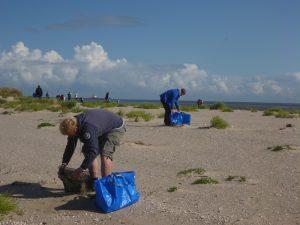Müllsammler im Einsatz; 60 Freiwillige sammelten 12 Kubikmeter Müll in 3 Stunden. Foto: Gregor Scheiffarth/Nationalparkverwaltung Nds. Wattenmeer